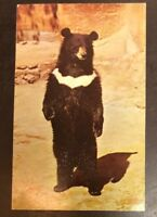 Himalayan Black Bear Southern & Eastern AsiaFrom The San Diego Zoo, CA. Postcard