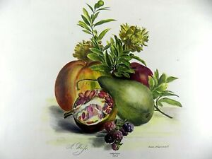 "1830 Desguerrois after Weiss (1801-1851); Large 15.5"" STILL LIFE FRUIT hand col."