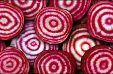 BEET CHIOGGIA/CANDY CANE 100+ SEEDS  VERY TENDER MILD AND SWEET EASY 2 GROW
