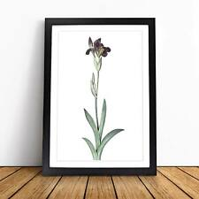 Flag Iris Flower Vintage Pierre-Joseph Redoute Framed Picture Print Wall Art
