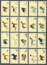 1934 Gallaher Dogs Tobacco Cards Complete Set of 24