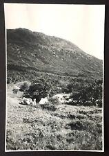 PHOTOGRAPH Ben Nevis OLD CAR Tent CAMPING 1951 Scotland 1241