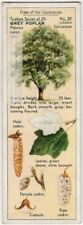 Grey Poplar Tree Populus canescens 1930s Trade Ad Card