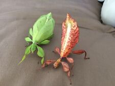 Leaf insect eggs! phyllium philippinicum, easy to care/breed. Stick insect X 10