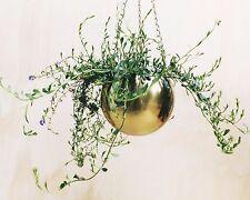 Brass Gold Hanging Planter Indoor Outdoor Pot Metal Hanger Terrarium Garden