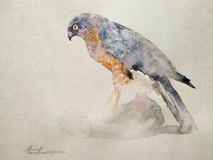 Hawk, Birds, Watercolor artwork, Handmade, Original painting on paper