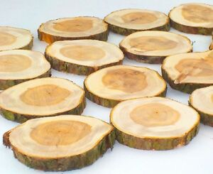 20 Natural Yew Wood Log Slices Tree Bark Rustic Wedding Table Centrepiece Decor