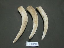 3 Cow Horn Cores for Projects Crafts Knife Cabin or Texas Lodge Decor Hc0195