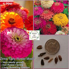 "25 ZINNIA""Early Wonder Mixed"" SEEDS(Zinnia elegans);Big bright colourful flower"