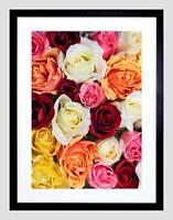 BACKGROUND ROSES BLOSSOMS FLOWER BLACK FRAME FRAMED ART PRINT PICTURE B12X8076