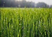 A1 Morning Dew Grass Poster Art Print 60 x 90cm 180gsm - Nature Cool Gift #13063
