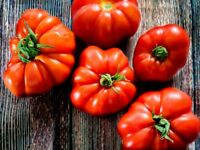"Tomatensamen, 100 Samen ""Marmande"" alte Sorte, Fleischtomate Saatgut"