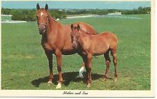 ag(W) Mother and Son Horses