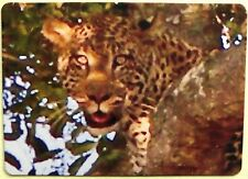 Eyes of a Leopard Full Deck Playing Cards New & Original 52+2 Jokers L@K Nice!