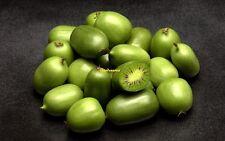20 Graines Kiwi de Sibérie ,Kiwai, Kiwi Berry,Actinidia arguta Hardy Kiwi seeds