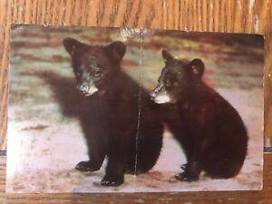 POSTCARD USED TWO BLACK BEAR CUBS
