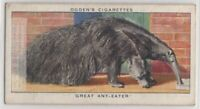 Giant Anteater Insectivorous Mammal Ant Bear 80+ Y/O Trade Ad Card