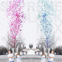 Gender Reveal Confetti Cannon Girl Pink Boy Blue Birthday Party Popper Cannons