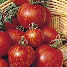0.3g (app.120) tomato seeds TIGERELLA heirloom Nice stripped color, medium early