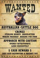 "Australian Cattle Dog Wanted Poster Fridge Dog Magnet Large 3.5"" X 5"""