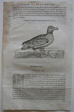 Serie pensión Aythya fuligula ORIG madera corte 1555 Belon ornitología