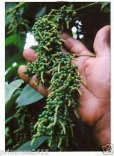 "Black Pepper High yield  Variety "" Pepper Thekken "" 25 Seeds from Kerala"