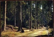 88 LES VOSGES  route forestiere    (25)