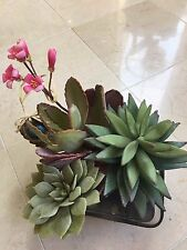 NDI Floral Arrangement of Succulents and Flowering Cactus Acrylic Water Rock Bed