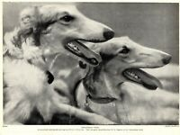 1930s Antique BORZOI Dog Print Russian Wolfhound Dog Print 3889d