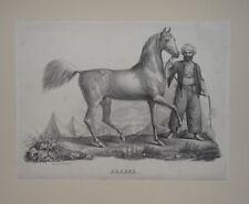 Araber - Brodtmann - Lithographie - Pferd Bildnis Zoologie Ross Pyramide - 1824