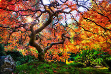 """Poster 19"""" x 13"""" Famous Japanese Garden Tree in Portland"""