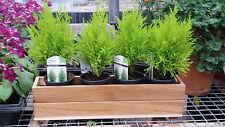 """Teak Wood Flower Planter Window Box garden 48 inch x 8""""x 8"""" stainless hardware"""