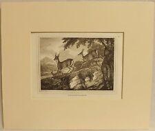 The Roe Buck, Copper Plate Engraving, Howitt 1812