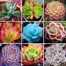 100 PCS Seeds Mixed Lithops Bonsai Living Stones Succulent Cactus Organic Garden