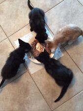 Sponsor Tnr Spay Neuter Kitten Outsider Cat Rescue Rec Cute Color Photo Donate