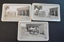 Vintage 1942 Photos Baby Horse Colts  Free Shipping 882