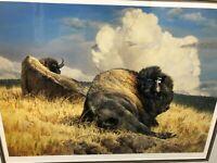 Thunderhead - Bison Framed Limited Edition Print by Nancy Glazier-Koehler