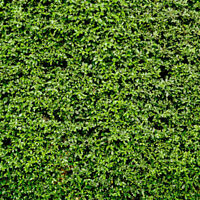 7x5ft Green Leaves Wall Backdrop For Photography Grass Floordrop Picture #HD3