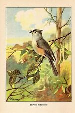 """1926 Vintage TODHUNTER BIRDS """"TUFTED TITMOUSE"""" 90 YEARS OLD Color Art Lithograph"""