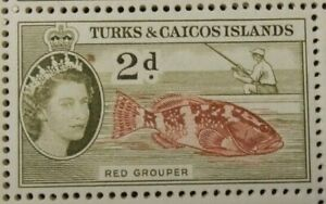 TURKS AND CAICOS ISLANDS 1948 SG229 2d. RED GROUPER -  MNH
