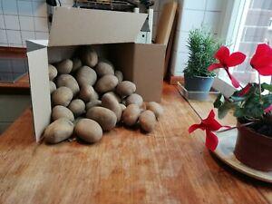 Hof Lenz Kartoffeln Belana Festkochend 10Kg im Karton Heidekartoffeln