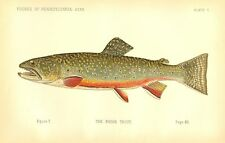 Very Rare Early 1889 Denton Fish Print  ~ The Brook Trout ~ First Denton's