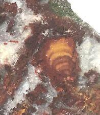 Nova Scotia Bay of Fundy mossy plume agate heel 1.2 oz (35 grams)