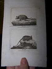 Antique 1797 Armadillo Engraving 18th Century Quadrupeds Print