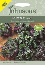 Johnsons - Vegetable - Kalettes Mixed F1  - 25 Seeds
