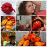 100Pcs Seeds Hots Chili Pepper Rare Kinds Extreme Exotic Plants in Home Garden