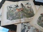 Natural History Plates - 17 Plates from ca: 1880 publication double page