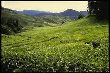 490067 Boh Tea Plantation In Malaysia A4 Photo Print