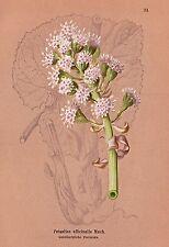 Originaldrucke (1800-1899) aus Europa mit Blume & Pflanze und Lithographie
