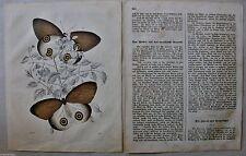 Originaldrucke (1800-1899) mit Zoologie-Motiv und Lithographie-Technik